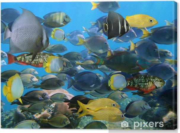 Tableau sur toile Banc de poissons - iStaging