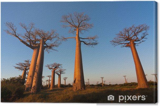 Tableau sur toile Baobab ruelle, Madagascar - Thèmes