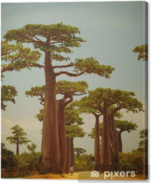 Tableau sur toile Baobab - Thèmes