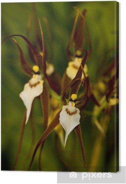 Tableau sur toile Bassia orchidée - Plantes