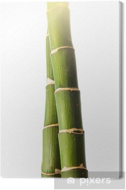 Tableau sur toile Bâton de bambou - Plantes