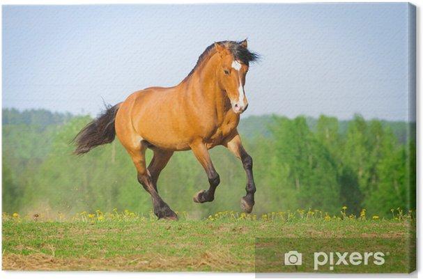Tableau sur toile Bay cheval court au galop en été - Thèmes