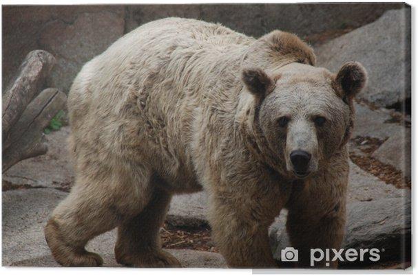 Tableau sur toile Bear1 - Thèmes