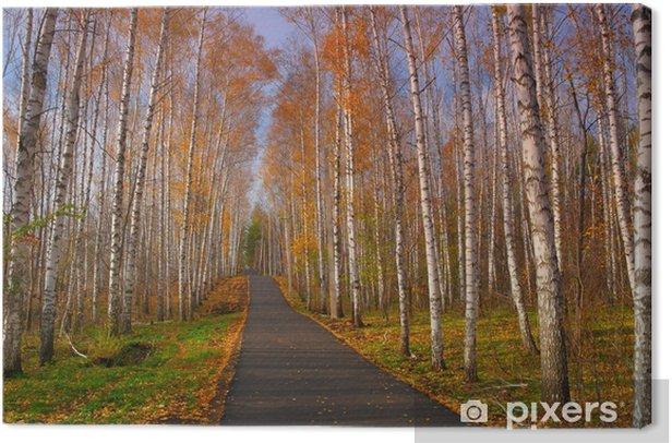 Tableau sur toile Beau paysage d'automne - Forêt