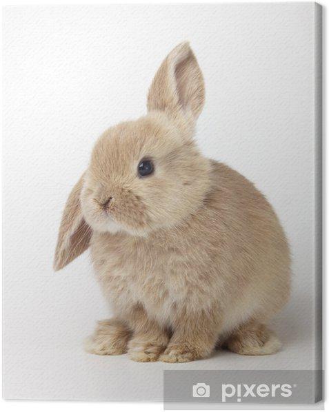Tableau sur toile Bébé de lapin orange sur fond blanc - Lapins