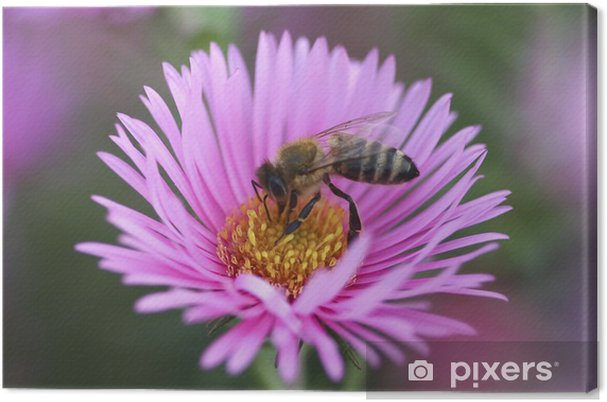 Tableau sur toile Bee recueillir le pollen de la fleur d'aster - Autres Autres