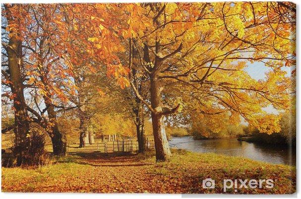 Tableau sur toile Bel automne dans le parc, en Écosse - Saisons