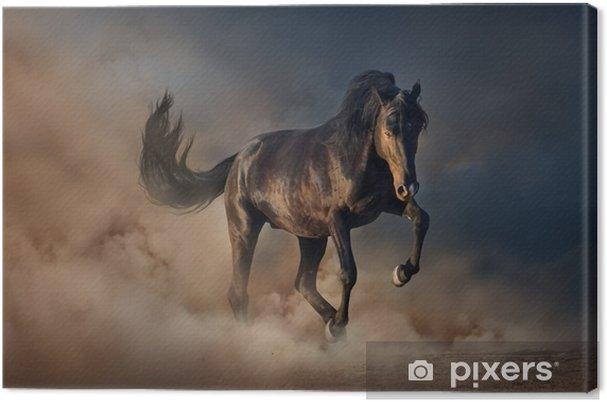Tableau sur toile Bel étalon noir courir dans la poussière du désert contre le ciel coucher de soleil - Animaux