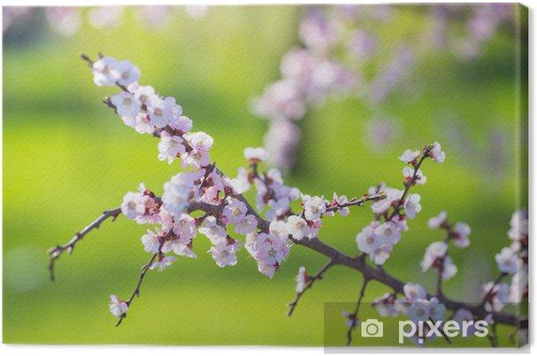Tableau sur toile Belle abricot fleurs blanches - Autres