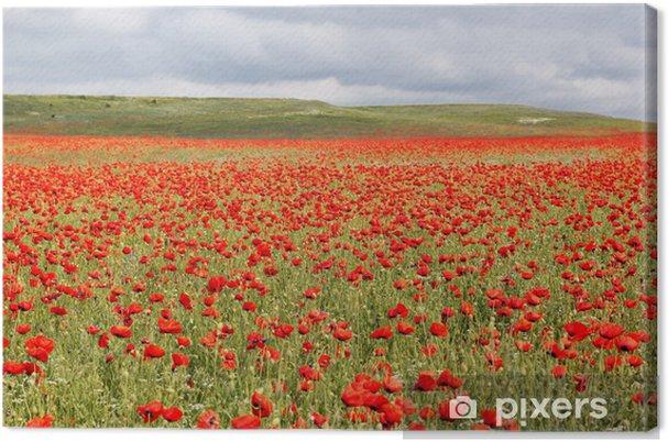 Tableau sur toile Belle champ de fleurs de pavot rouge - Campagne