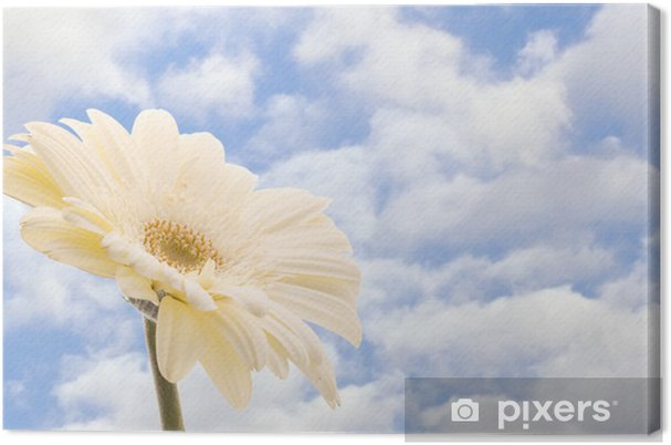 Tableau Sur Toile Belle Fleur Blanche De Gerbera Contre Le Ciel Bleu