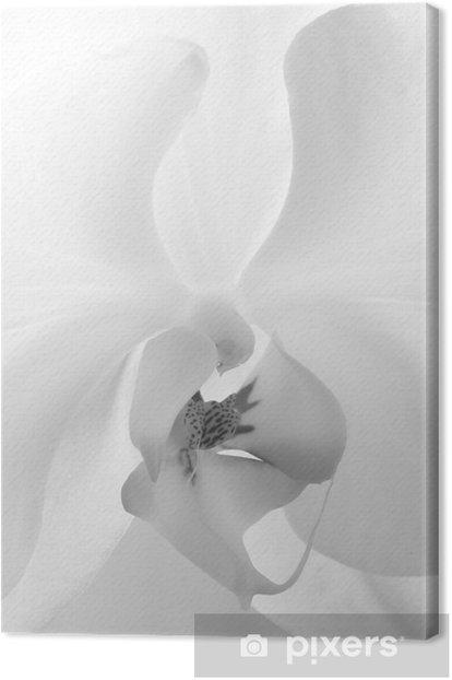 Tableau Sur Toile Belle Fleur Blanche Orchidee Floraison Clitori Vagin Pixers Nous Vivons Pour Changer