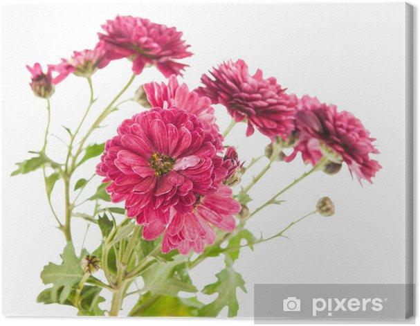 Tableau sur toile Belle fleur de chrysanthème - Fleurs
