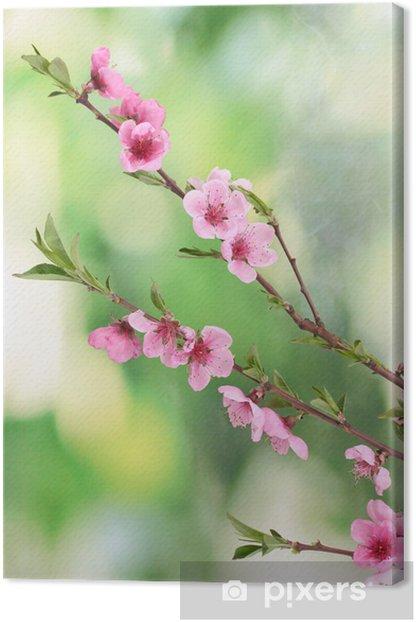 Tableau sur toile Belle fleur de pêcher rose sur fond vert - Fruits