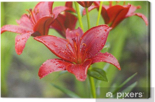 Tableau sur toile Belle fleur humide (Lilium L.) - Saisons