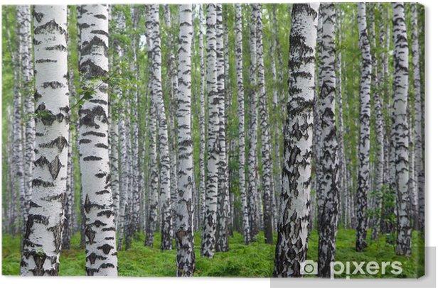 Tableau sur toile Belle forêt de bouleaux d'été - Styles