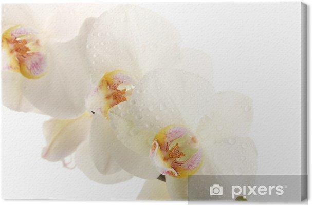 Tableau sur toile Belle orchidée isolé sur blanc - Fleurs