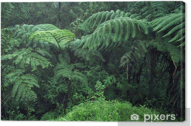 Tableau sur toile Belle Rainforest - Thèmes