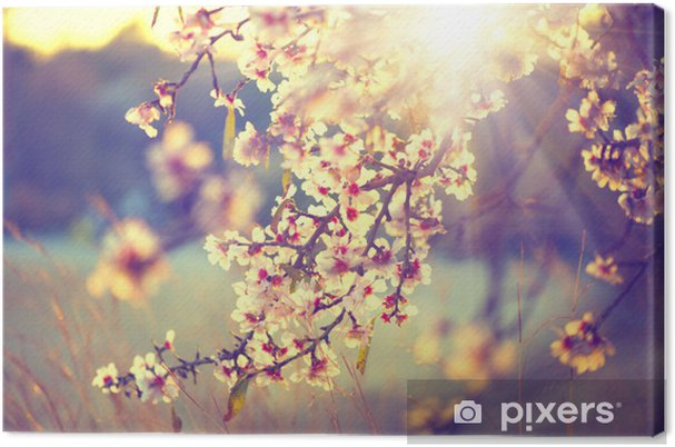 Tableau sur toile Belle scène de la nature avec la floraison arbre et le soleil fusée - Thèmes