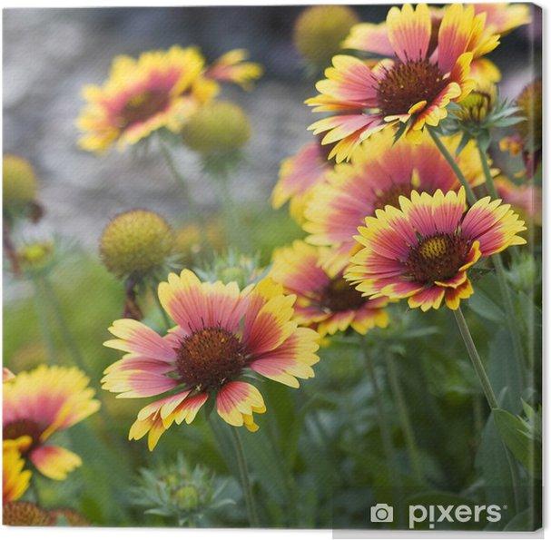 Tableau sur toile Belles fleurs de jardin d\'automne • Pixers® - Nous ...