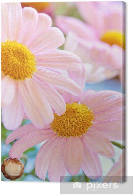 Tableau marguerite rose 4 tableaux sur toile belles fleurs de marguerite rose