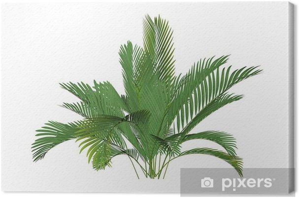 Tableau sur toile Bergpalme - Plantes