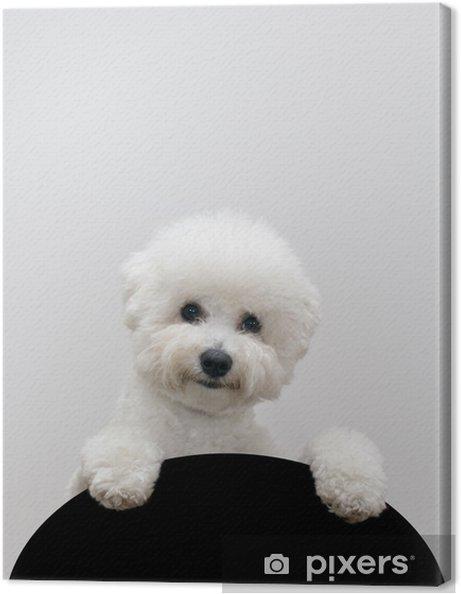 Tableau sur toile Bichon Frise chien - Mammifères