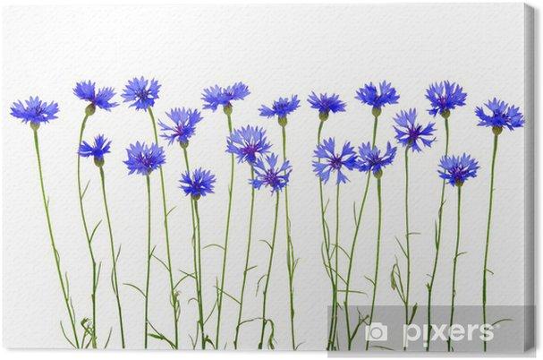 Tableau sur toile Bleuets - Bleuets