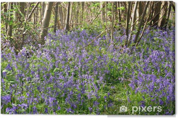 Tableau sur toile Bluebells dans la forêt - Saisons