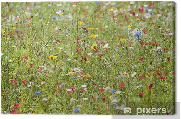 Tableau sur toile Blumenwiese - Fleurs