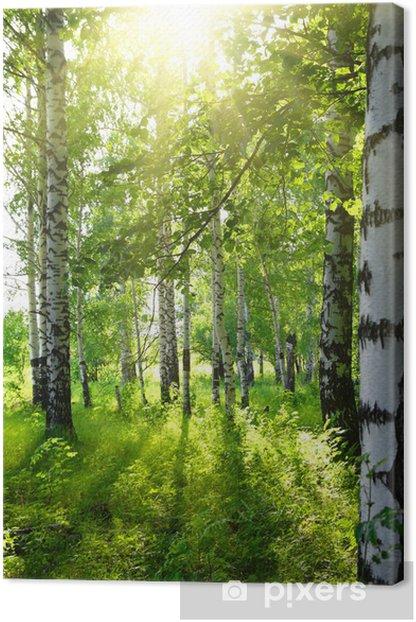 Tableau sur toile Bois de bouleaux en été avec le soleil - Destin