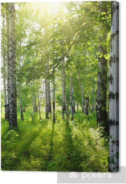 tableau sur toile bois de bouleaux en t avec le soleil. Black Bedroom Furniture Sets. Home Design Ideas