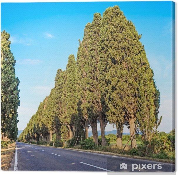 Tableau sur toile Bolgheri cyprès arbre paysage. Toscane repère, Italie - Europe