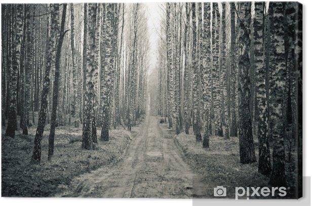 Tableau sur toile Bouleau noir et blanc des forêts - Styles