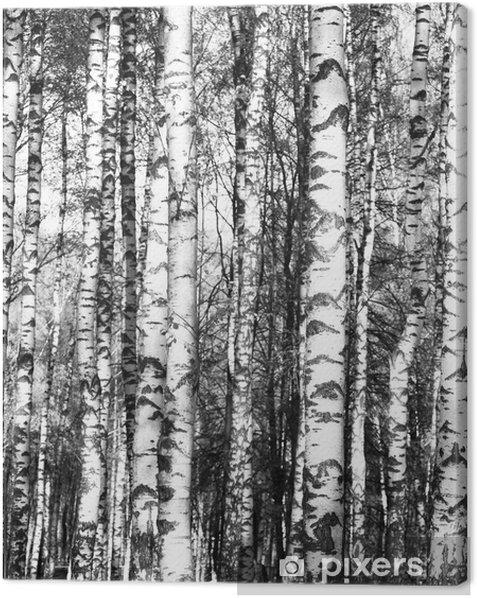 Tableau sur toile Bouleaux noir et blanc - Thèmes
