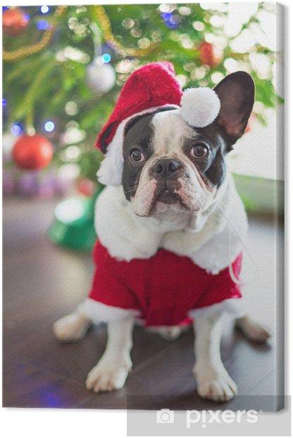 Tableau sur toile Bouledogue français habillé en costume de Père Noël pour Noël - Bouledogues français