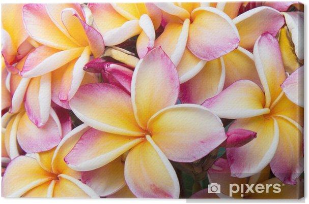 Tableau sur toile Bouquet de franfipani - Fleurs