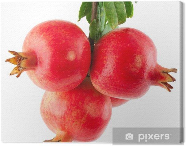 Tableau sur toile Branche d'un arbre grenat avec des fruits et des feuilles - Fruits