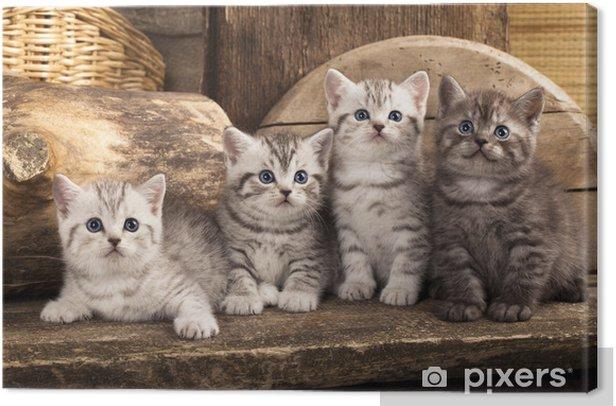 Tableau sur toile British chaton sur fond rétro - Thèmes