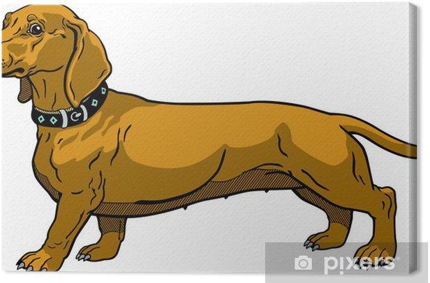 Tableau sur toile Brown dachshund - Mammifères