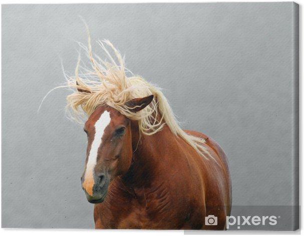 Tableau sur toile Brown étalon cheval à la crinière blonde de agitées par le vent - Mammifères
