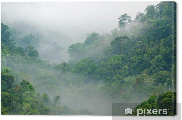 Tableau sur toile Brume matinale dans la forêt tropicale - Thèmes