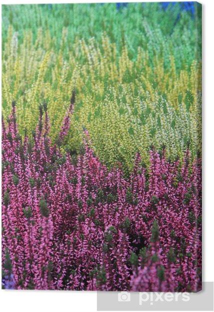 Tableau sur toile Bruyères multicolore de Calluna - Bruyère