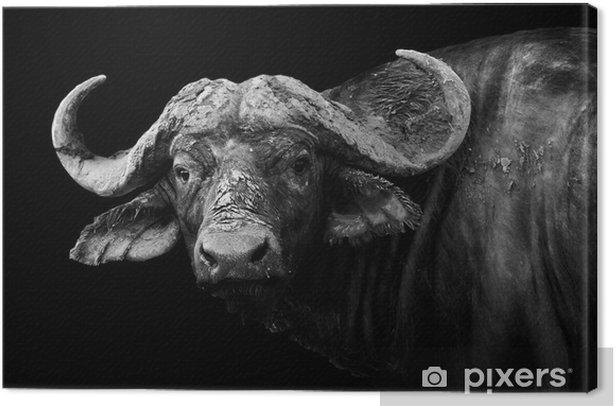 Tableau sur toile Buffalo en noir et blanc - Éclectique