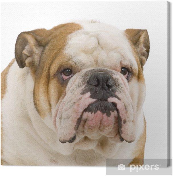 Tableau Sur Toile Bulldog Anglais Pixers Nous Vivons Pour Changer