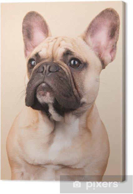 Tableau sur toile Bulldog french - Bouledogues français