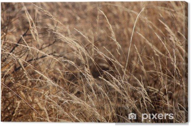 Tableau sur toile Bushveld Herbe - Nature et régions sauvages