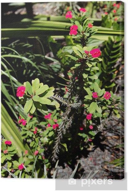 Tableau sur toile Cactus de Guadeloupe - Amérique