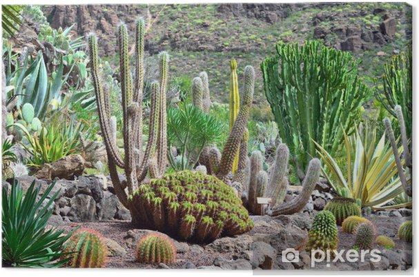 Tableau sur toile Cactus Garden - Vacances