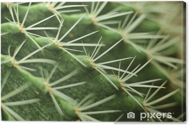 Tableau sur toile Cactus - Plantes